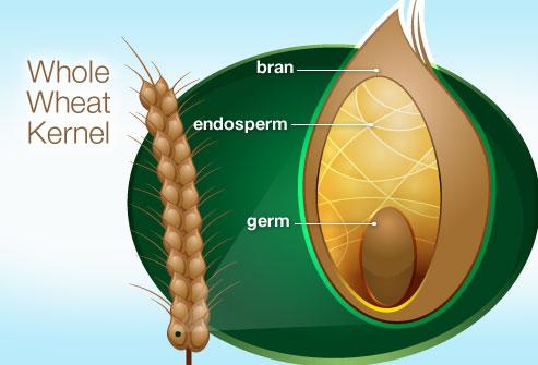 wheat-kernel